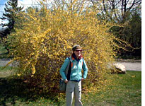 Kirsten with forsythia
