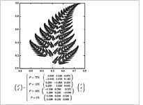 Fern Diagram
