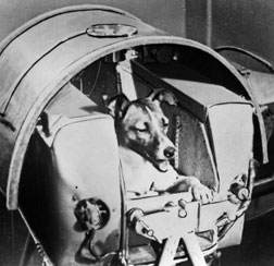 Laika the space dog.