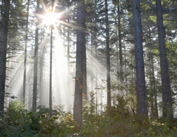 Sunlight breaking through trees. Click image to expand.