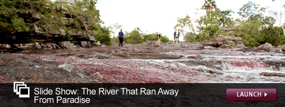 Click here to launch a slideshow on Cano Cristales.
