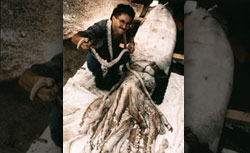 Steve O'Shea, a curator at the Ministry of Agriculture and Fisheries, examines a giant squid in 1996. Click image to expand.