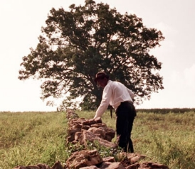 120216_cb_tree_shawshank.jpg.crop.thumbnail-small