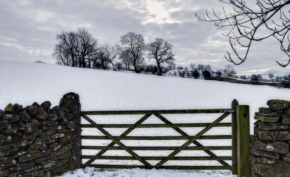 Farm gate in winter.