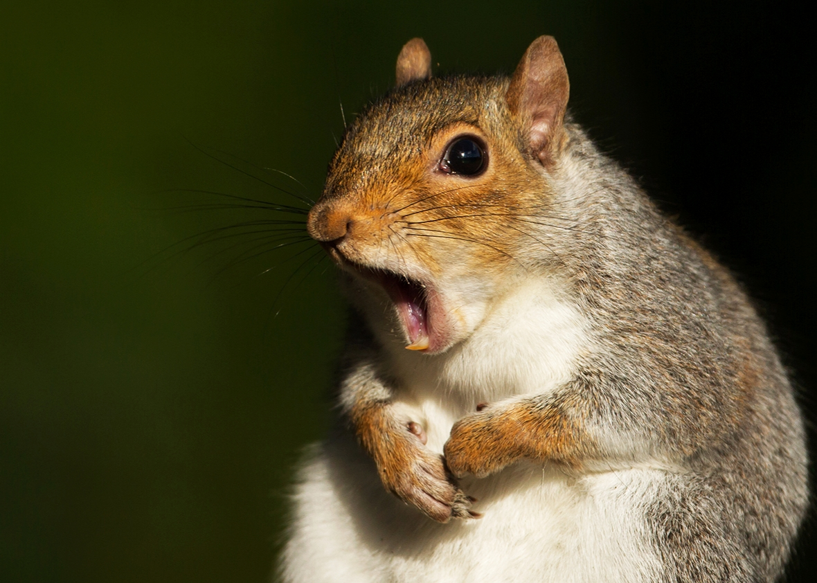 frustrated squirrel.