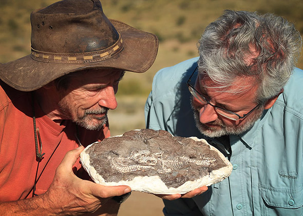 Roger Smith, left, and Neil Shubin examine a fossil of two juvenile Thrinaxodon — mammal-like reptiles that survived the Permian extinction.