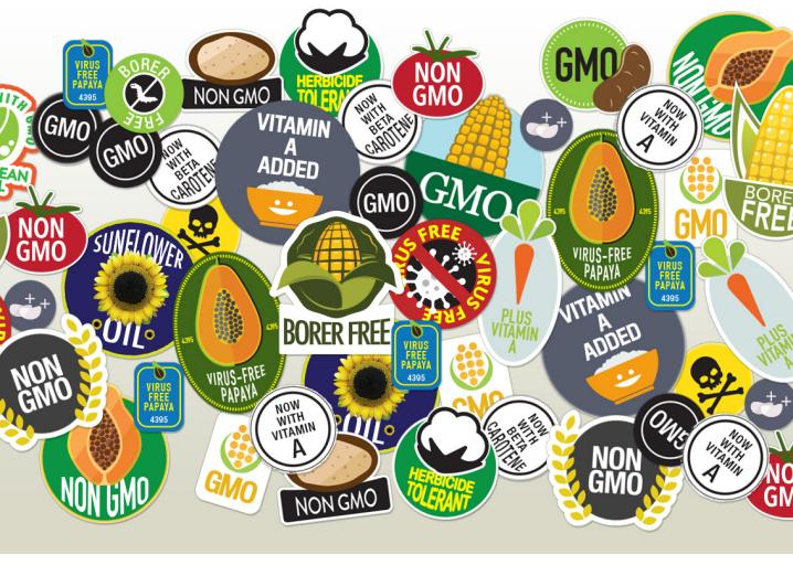 Are GMOs safe? Yes  The case against them is full of fraud