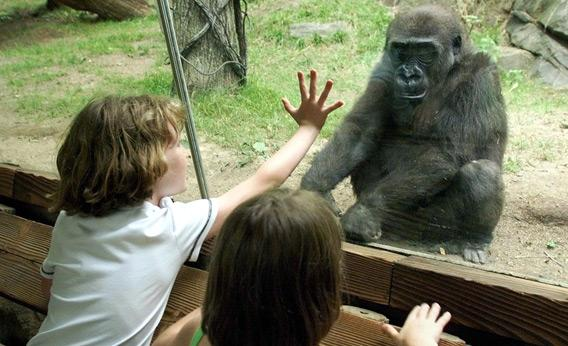 Children visiting the Bronx Zoo.