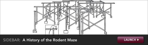 Click to launch a sidebar on rodent mazes.