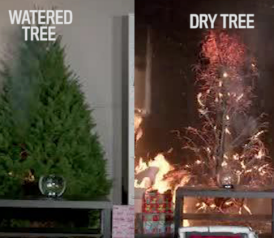 christmas tree fires are far worse if you dont water your tree - Mythbusters Christmas Tree