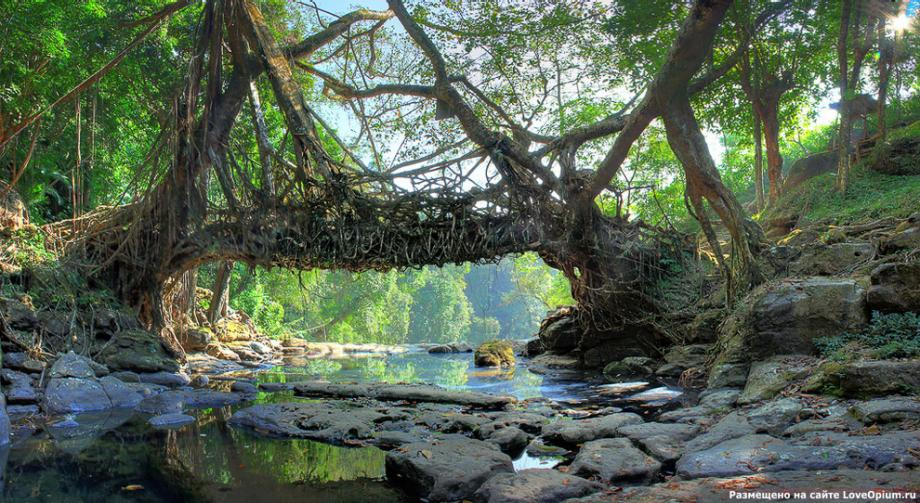 Cherrapunji India  city pictures gallery : The Root Bridges of Cherrapunji