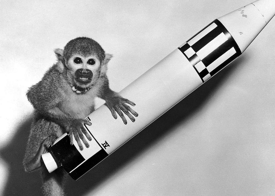 Miss Baker, the first monkey to survive a trip to space