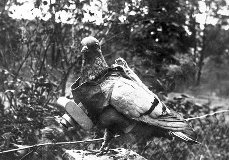 pigeon photography, pigeon cam, Julius Neubronner, World War I, FIrst World War, animal camera, German inventor