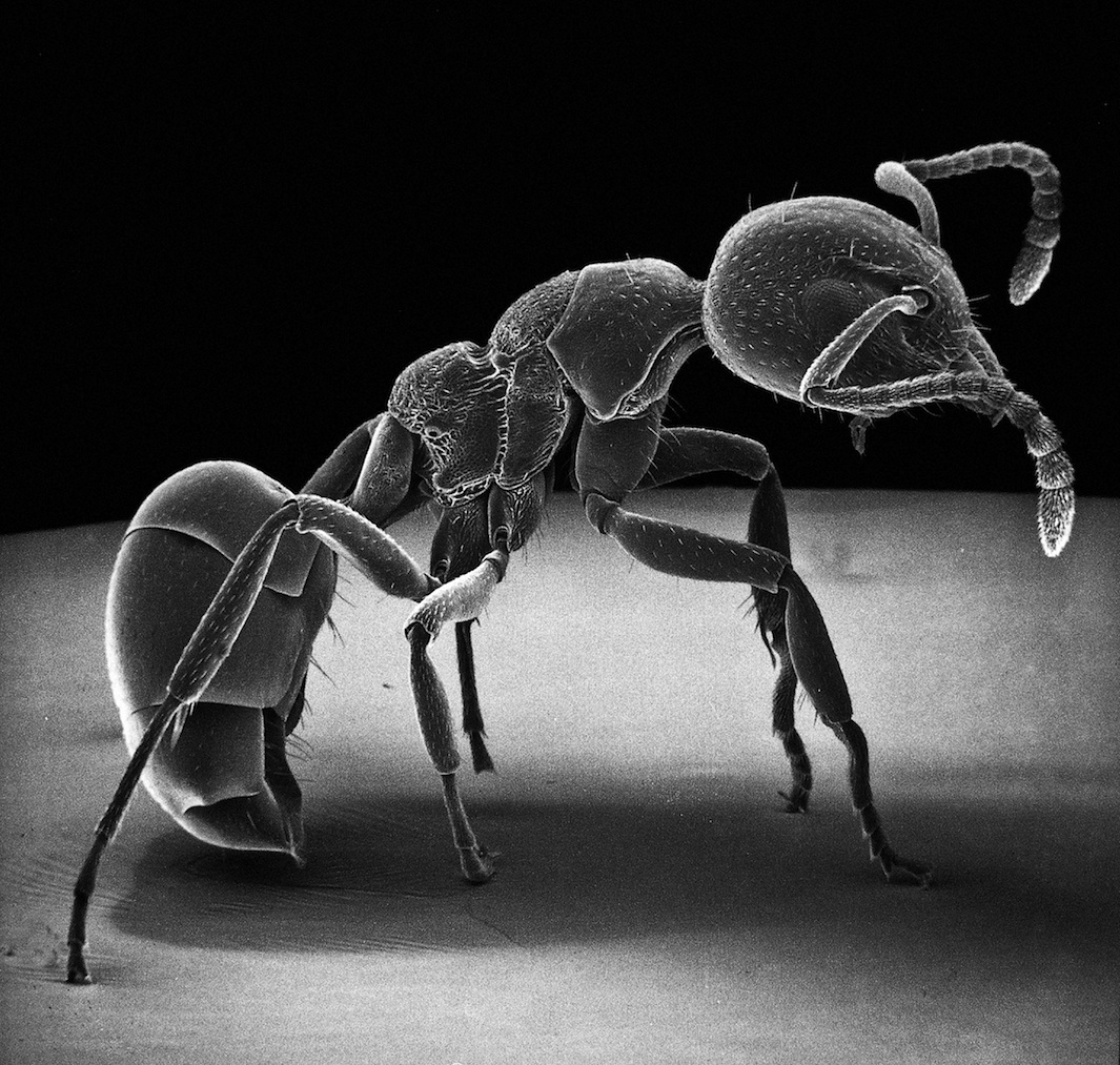 ant under a microscope - photo #42