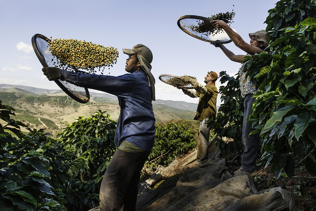 Steve McCurry Photographs Coffee Production Around The World In His