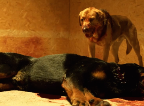 White God movie: A dog uprising creates empathy and a