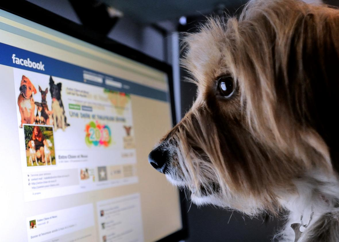 158954258-dog-stands-in-front-of-a-computer-screen-with-a