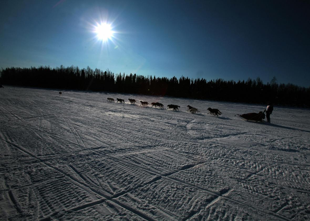 73491241-anchorage-united-states-rookie-jon-korta-mushes-his-sled