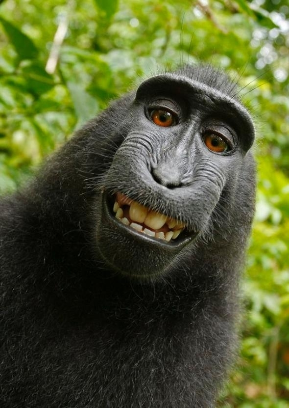 monkey_selfie_fixed