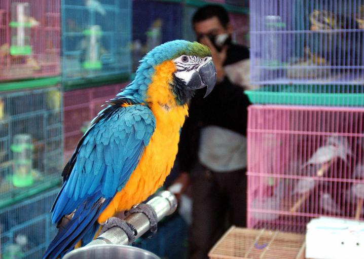 Parrots and macaws: Do birds make good pets?