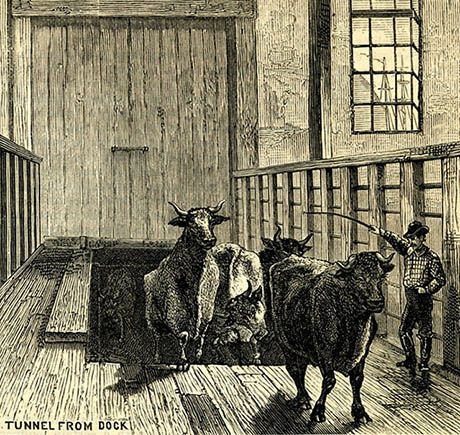 From The Manhattan Abattoir by V.L. Kingsbury, 1877.
