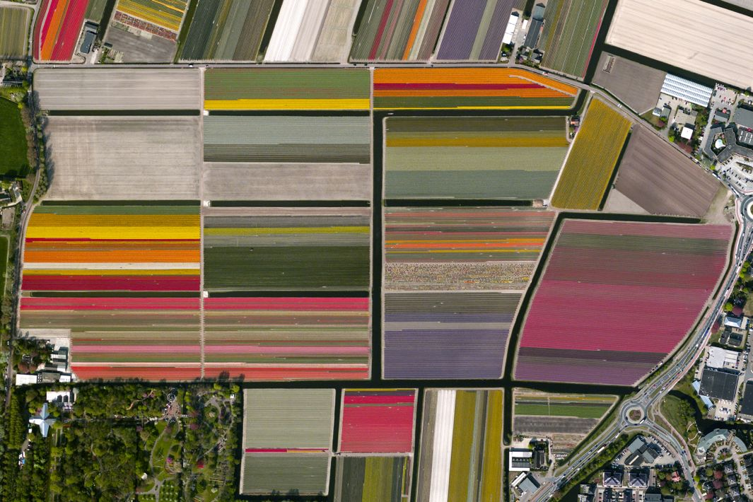 Tulip fields in Lisse, Netherlands. Courtesy of Daily Overview. Satellite images copyright DigitalGlobe Inc.