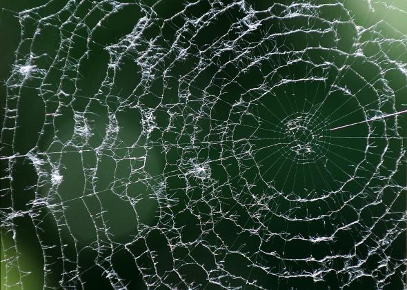114151147-spider-web-on-the-patio-of-a-restaurant-shines-in