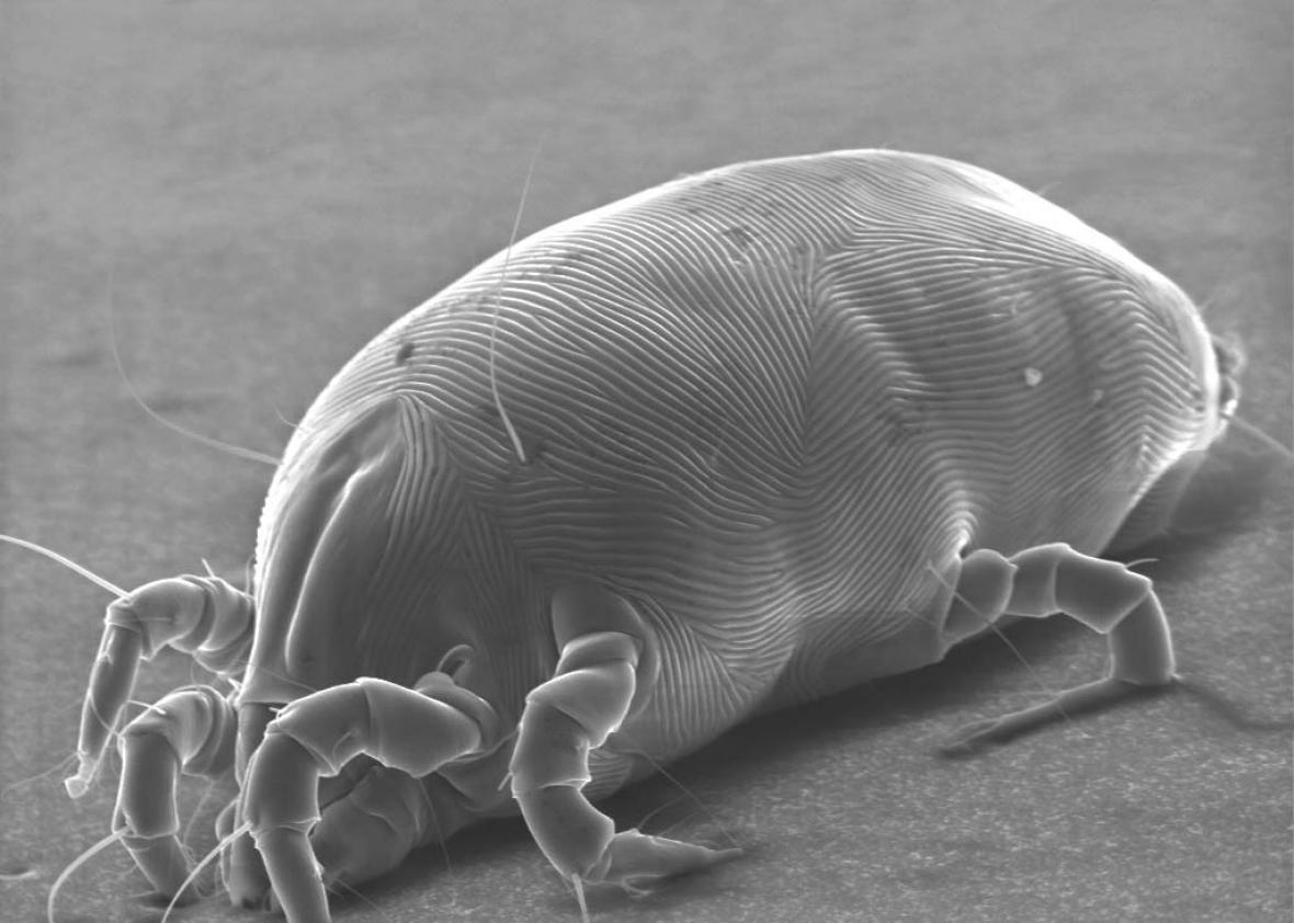 Mattresses dust mites and skin cells How gross does your mattress