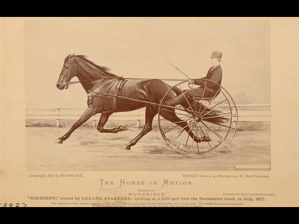images%2Fslides%2F7_trotting_occident